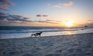 dogs beach sunrise:set
