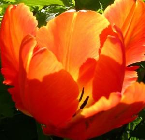 spring 2011 091