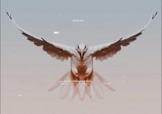 dove-processing-minimalism-s-animals-235x165